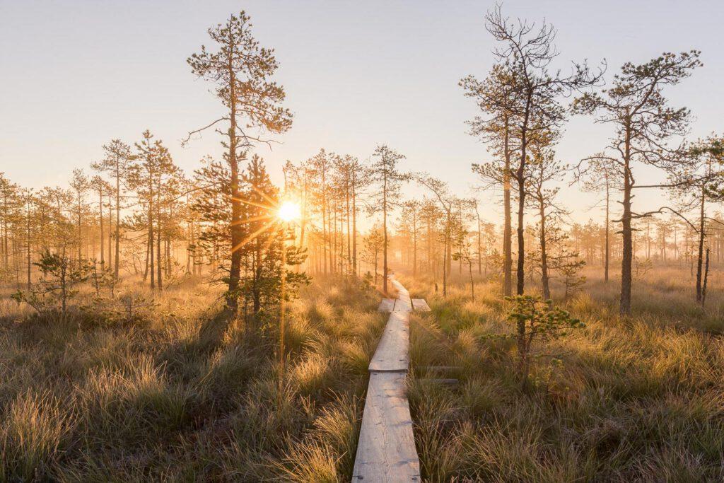 Linnaistensuon pitkospuut auringonlasku - Jari Sokka - AK-Taulucenter