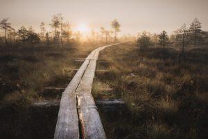 Torronsuo pitkospuut auringonlasku - Jari Sokka - AK-Taulucenter