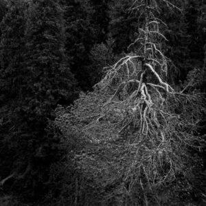 5-osaiset Symmetriset Canvastaulusarjat – Näränkävaara